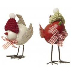 Two assorted festive birds with adorable wooly hat