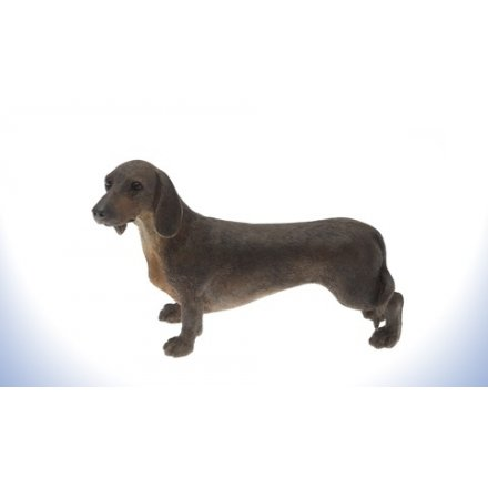 Leonardo Dog - Dachshund