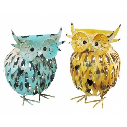 Twit Twoo, these Owl's are full of character and have been finished to look distressed