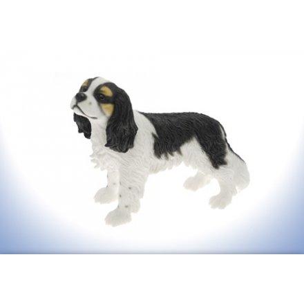 Leonardo Dog - Cavalier King Charles Spaniel