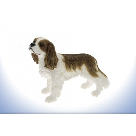 Leonardo Dog - Cavalier King Charles Spaniel
