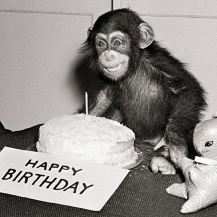 Happy Birthday Chimp Greeting Card