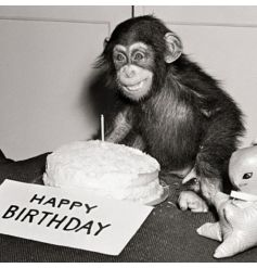 This humorous black and white greetings card featuring a baby chimp in front of a birthday cake