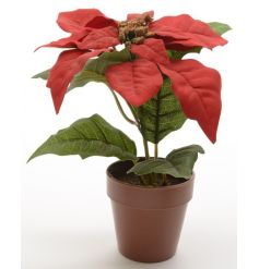 An authentic silk poinsettia in a pot, making a lovely festive decoration each year.