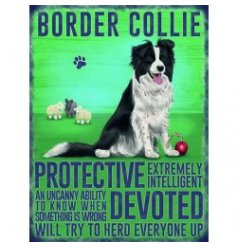 Mini metal dangler sign with Border Collie image and description