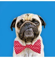 From the Wild Thing range by Icon Cards, a humorous pug greetings card