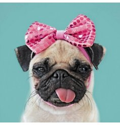 From the new Wild Things range by Icon cards, a humorous pug greetings card