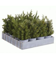 An assortment of 4 mini artificial trees in grey pots. Ideal for festive displays and home decoration.