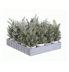 A mix of 4 artificial trees in pots, each with a snowy finish. Ideal for display and home decoration.