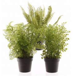 An assortment of fine quality, realistic fern plants set within black pots. A fresh home accessory.