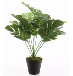 A richly coloured and fine quality artificial Monstera plan set within a classic black pot. A feature item for the home.