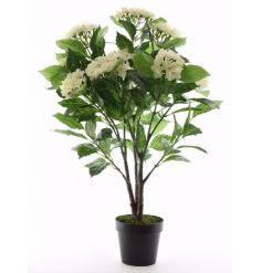 A full and fine quality cream hydrangea plant with pot. A beautiful home accessory which will last a lifetime!