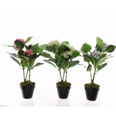 An assortment of pink, cream and purple hydrangea plants set within pots. A stylish home accessory.