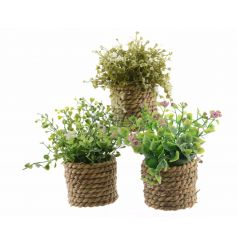 An assortment of 3 pretty artificial plants with delicate flowers. Each is set within a natural, chunky rope planter.