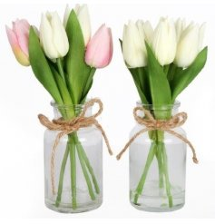 An assortment of 2 tulip arrangements in glass vases with jute string.