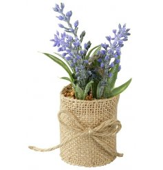 Add some rustic charm to the home with this lavender plant set within a pot and finished with hessian.
