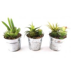3 assorted artificial succulents in tin pots