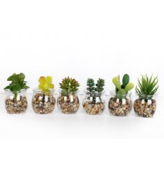 An assortment of 6 artificial succulents in small glass pots
