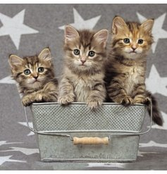 An adorable bucket of kittens themed greetings card