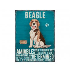 A mini metal sign with a Beagle illustration with characteristics listed.