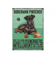 A charming metal sign with a Doberman image and dog breed characteristics.
