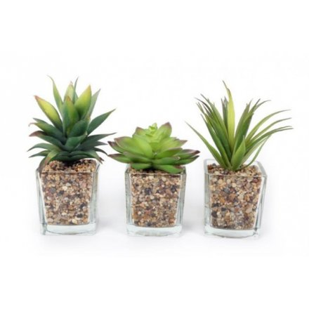 Assorted Glass Succulent Pots