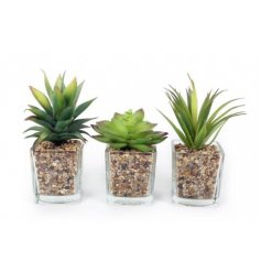 3 simple succulent themed potted plants.