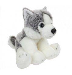 A cute and cuddly husky dog soft toy