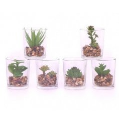 A stylish assortment of 6 succulent based pots
