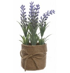 A charming miniature lavender flower set within a hessian pot with a rustic jute bow.