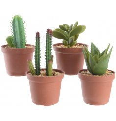 A stylish assortment of succulent potted plants