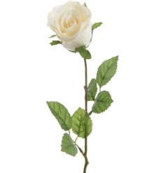 A delicate white rose of a stem. A timeless floral decoration for the home.