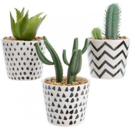 Geometric Succulents, Mix