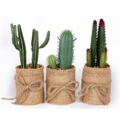 An assortment of 3 faux cacti in hessian pots