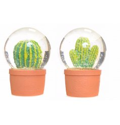 An assortment of 2 cactus snow globes