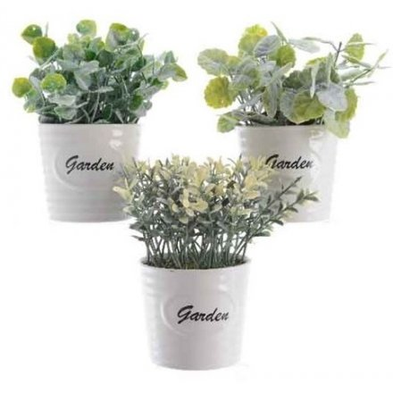 White Garden Pot Plants, 3 assorted