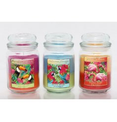 Add a paradise infused feel to your home space with these tropical layered candles