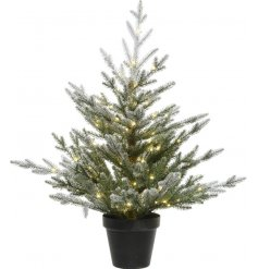 Bring a festive wintered touch to any home interior or exterior with this beautiful potted Norway Spruce Tree