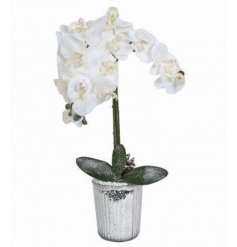 Bring a touch of classical elegance to your home decor at Christmas time with this beautifully decorated orchid decorati