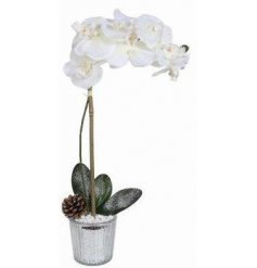 Indulge your home with a charmingly elegant touch with this beautifully potted artificial Orchid