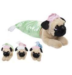 An adorable assortment of dressed up soft toy pugs