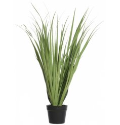 Bring a touch of green to your home interior with this charming potted Agrostis Plant