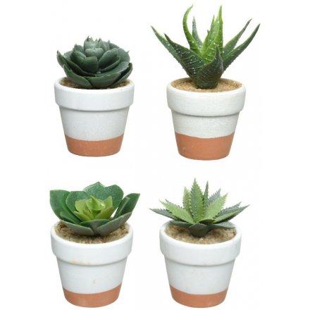 Artificial Succulents In Terracotta Pots