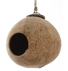A hanging shaved coconut, suitably hollowed out for bird residence!