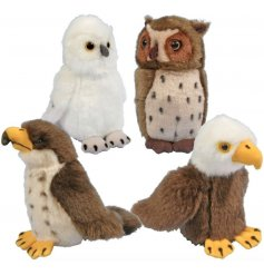 A soft and snuggly assortment of bird themed soft toys