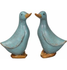 An assortment of 2 pastel blue duck ornaments with a shabby chic finish. A charming interior accessory for the home.