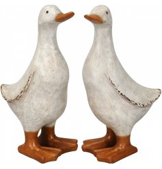 An assortment of 2 white duck ornaments with a shabby chic finish. A charming decorative accessory for the home.