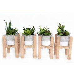 An assortment of artificial succulents in a contemporary grey and white pot. Each is set within a wooden stand.