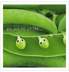 A quirky green themed greetings card from the wonderful 'Life is Sweet' range by Icon Cards