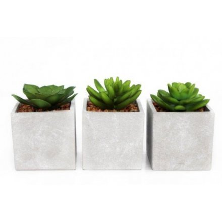 Concrete Potted Succulents